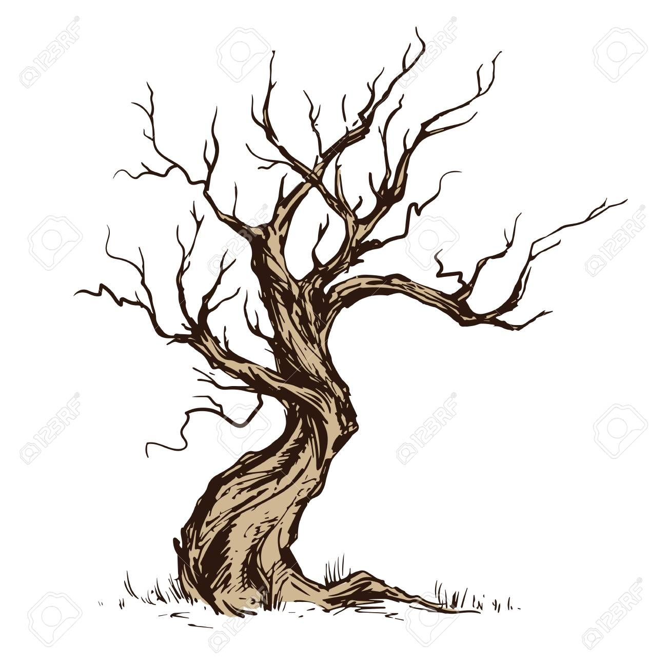 Library of dry trees picture library library png files ...