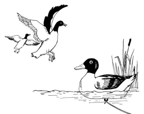 Duck decoy clipart graphic free download Bird Line Drawing clipart - Duck, Hunting, Drawing, transparent clip art graphic free download