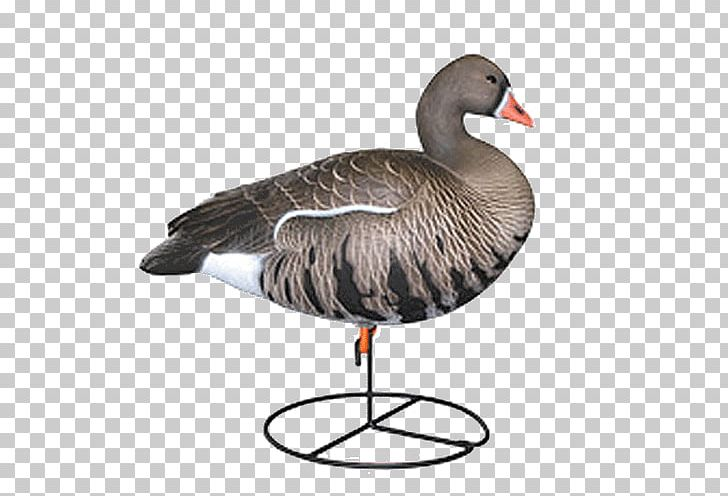 Duck decoy clipart graphic library stock Greylag Goose Duck Mallard Decoy PNG, Clipart, Anseriformes, Beak ... graphic library stock