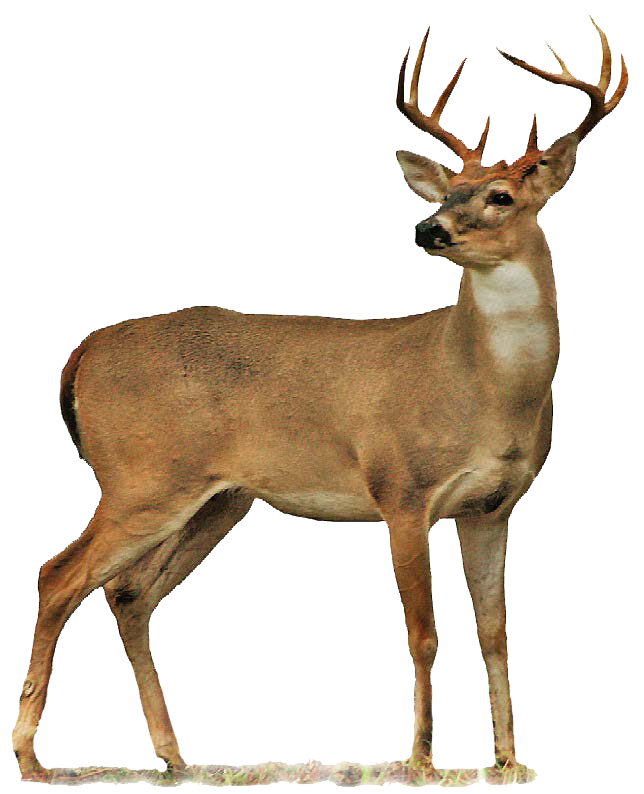 Runing deer with a cross clipart banner library download Hunting: Oklahoma Department of Wildlife Conservation | Art 7 ... banner library download