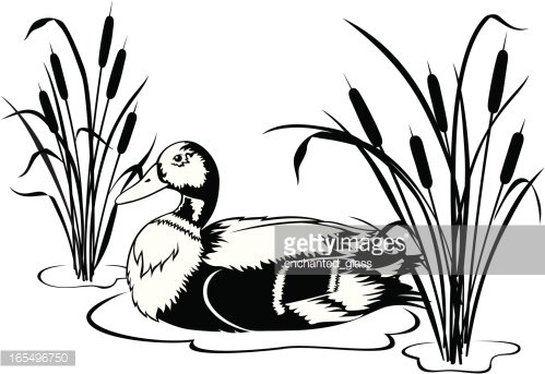 Ducks in the water black and white clipart clipart library stock Black & White Mallard Duck With Cattails premium clipart ... clipart library stock