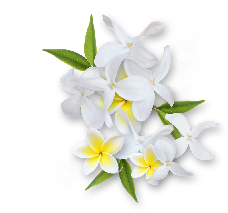 Jasmine flower clipart clipart stock ldw_UnderaPalmTree_cluster13.png | Pinterest | Clip art and Album clipart stock
