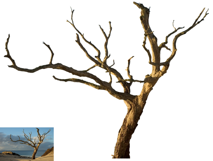 Images of dead spacehero. Dying tree clipart