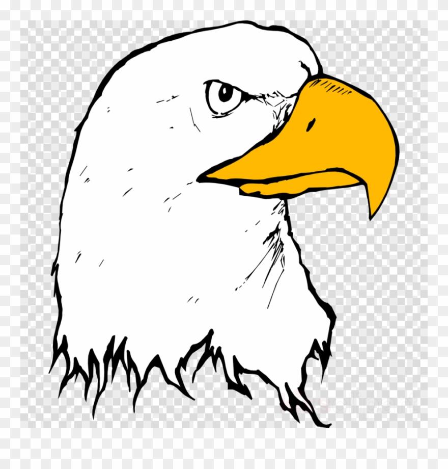Eagle beak clipart stock Download Eagle Beak Clipart Bald Eagle Clip Art Eagle - Eagle Beak ... stock