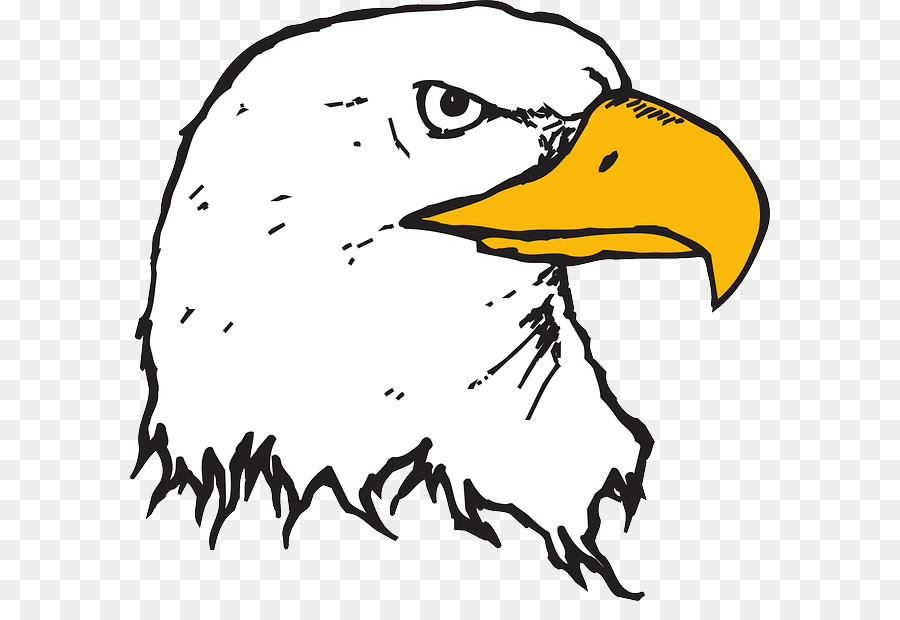 Eagle beak clipart vector royalty free stock Bird Line Drawing png download - 640*601 - Free Transparent Bald ... vector royalty free stock