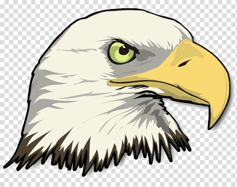 Eagle beak clipart clip art royalty free Bald Eagle Drawing , eagle transparent background PNG clipart ... clip art royalty free