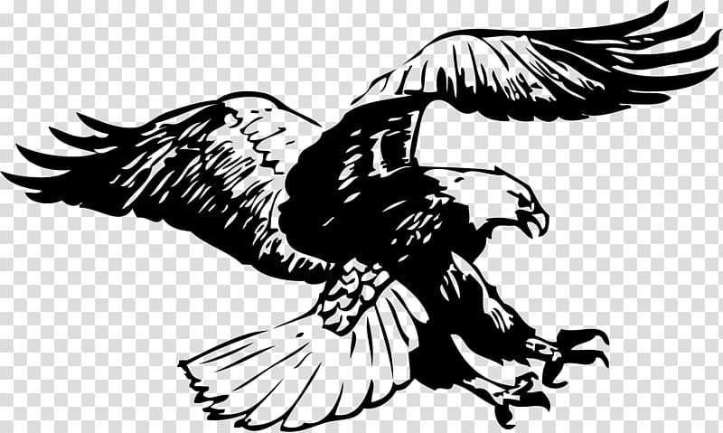 Eagle flying clipart black and white graphic black and white stock Black bald eagle flying , Bald Eagle Black-and-white hawk-eagle ... graphic black and white stock