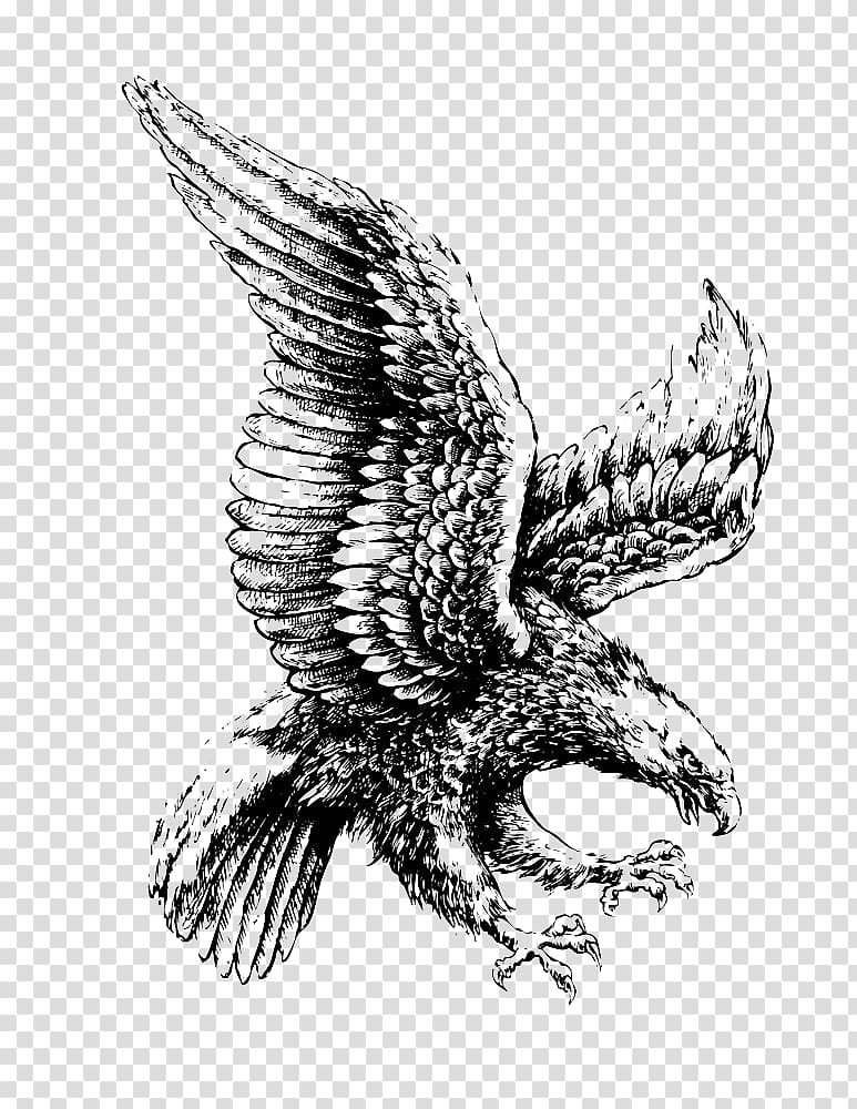 Eagle flying in clouds clipart black and white svg royalty free library Eagle , Bald Eagle Drawing Illustration, Flying eagle transparent ... svg royalty free library