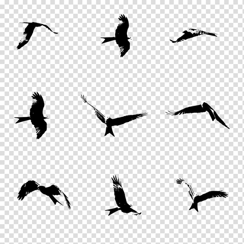 Eagle flying in clouds clipart black and white freeuse stock Bird Flight Brush, Flying eagle transparent background PNG clipart ... freeuse stock
