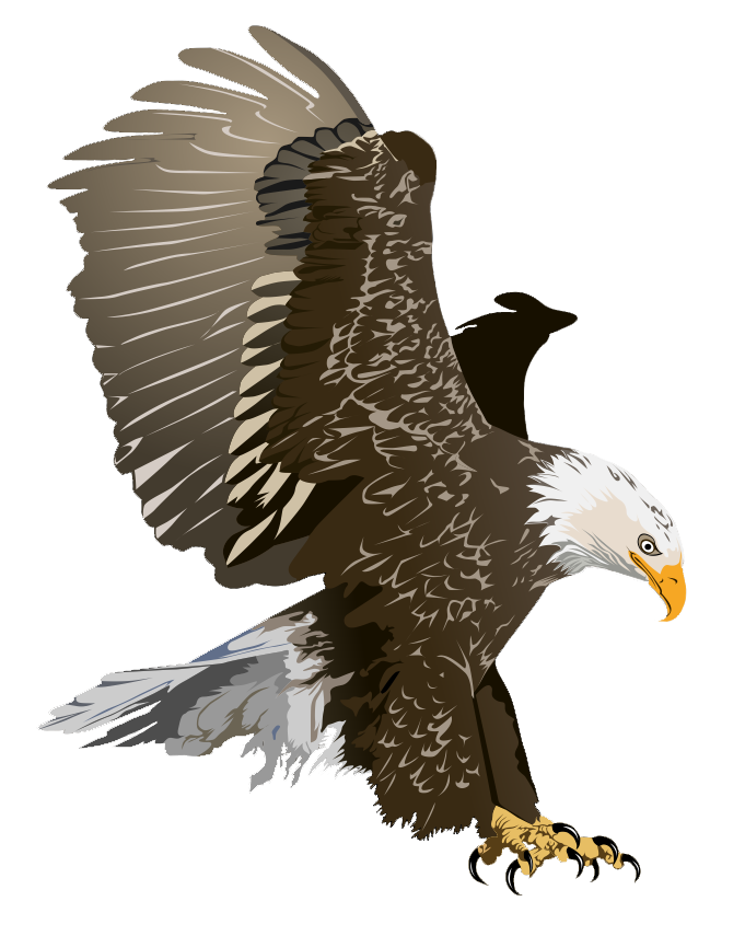 Realistic bird clipart side image download Free Eagle Cliparts, Download Free Clip Art, Free Clip Art on ... image download
