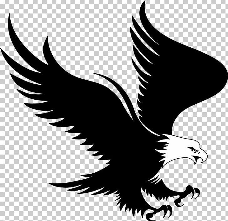 Eagle logo clipart png transparent Bald Eagle Logo PNG, Clipart, Animals, Bald Eagle, Beak, Bird, Bird ... png transparent