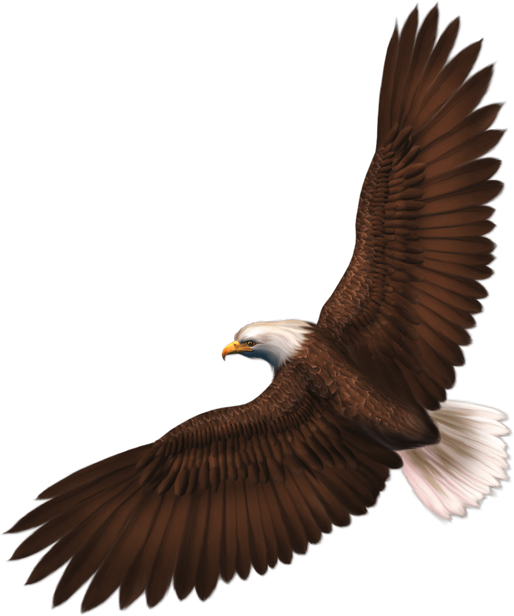 Eagle wearing a crown clipart picture free Download Eagle Png Image With Transparency Download HQ PNG Image ... picture free