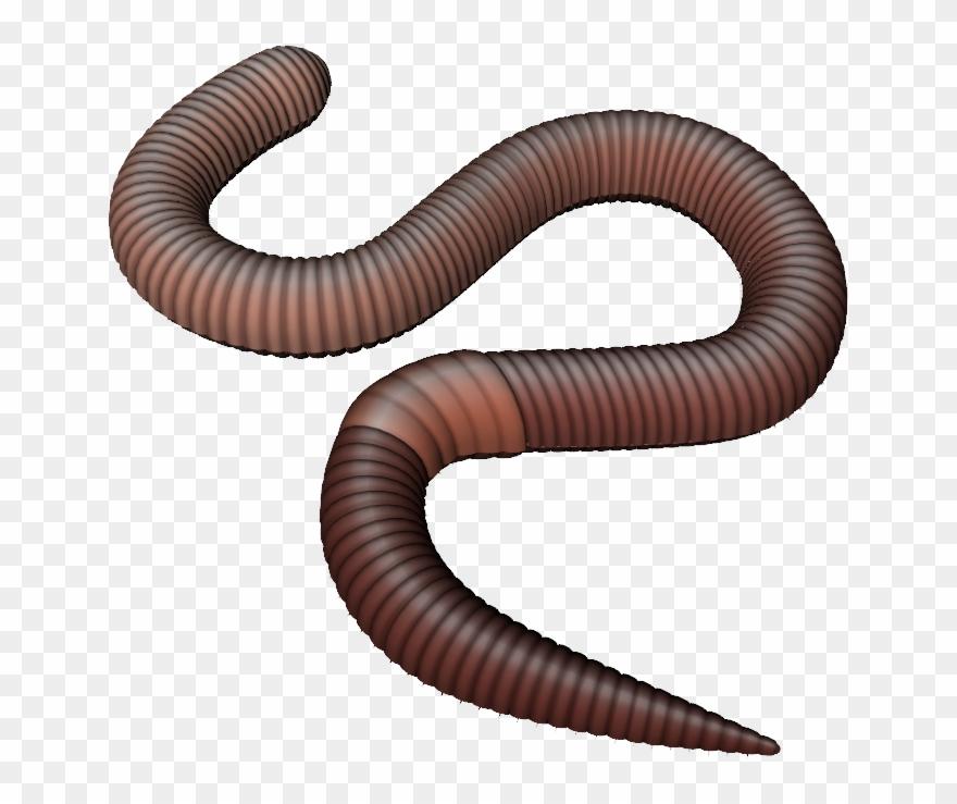 Worm clipart transparent background clip art Png Earthworm Transparent Earthworm - Transparent Background ... clip art