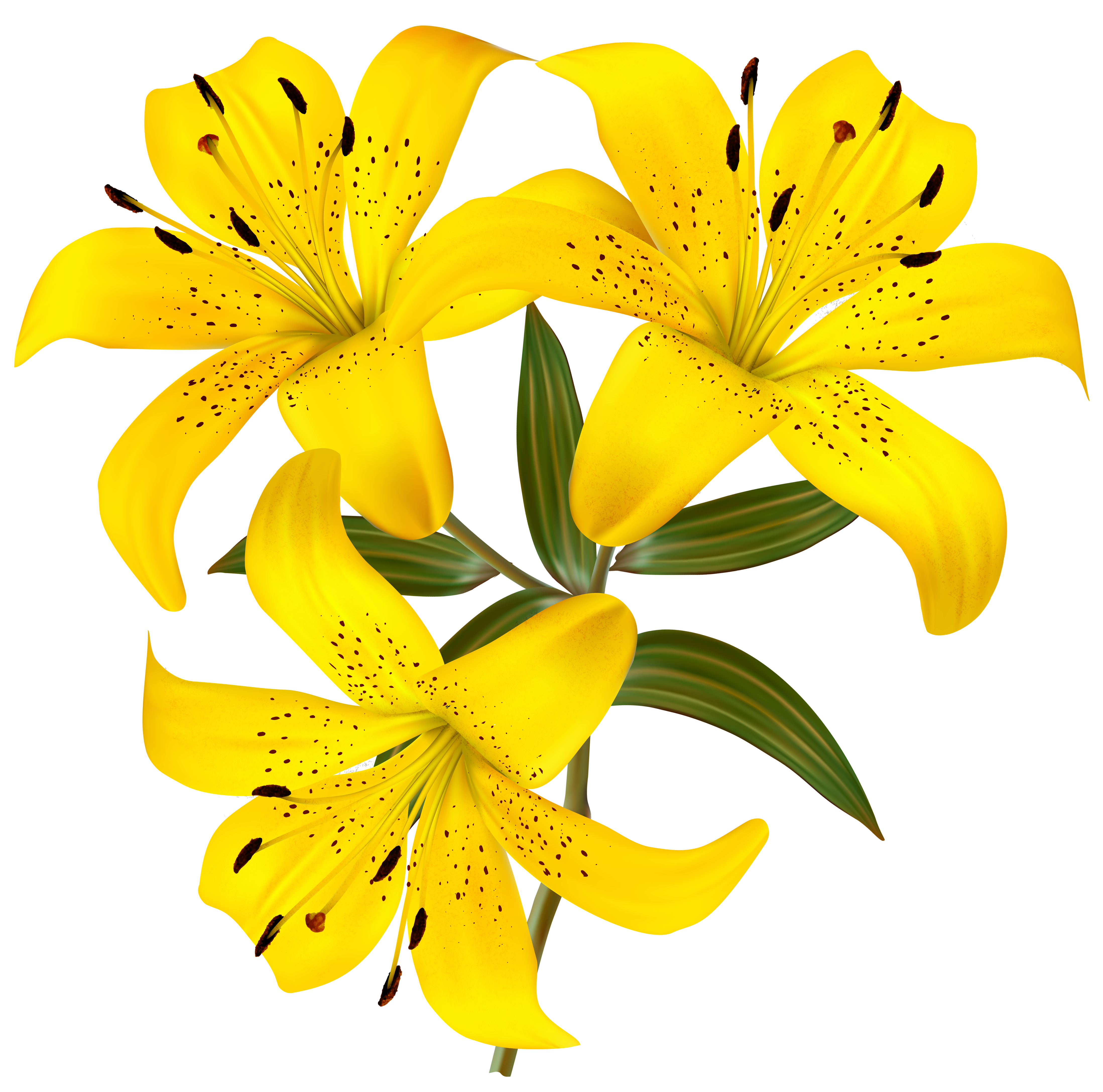 Yellow bell flower clipart banner royalty free Tiger Lily Clipart at GetDrawings.com | Free for personal use Tiger ... banner royalty free