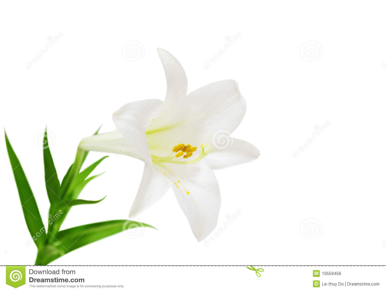 Easter lily border clipart free clip free Images Of Easter Lilies | Free download best Images Of Easter Lilies ... clip free