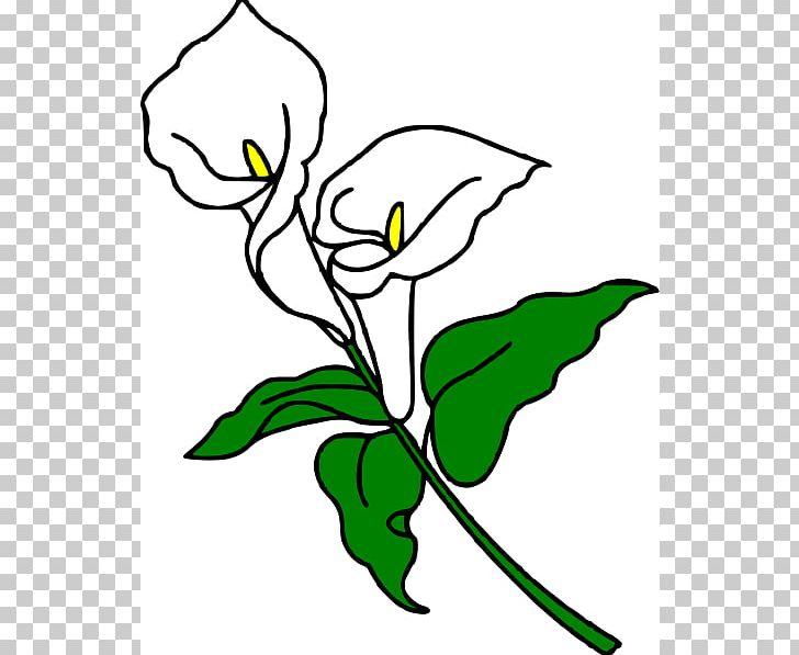 Easter lily spray black & white clipart svg black and white Callalily Arum-lily Easter Lily Flower PNG, Clipart, Art, Artwork ... svg black and white