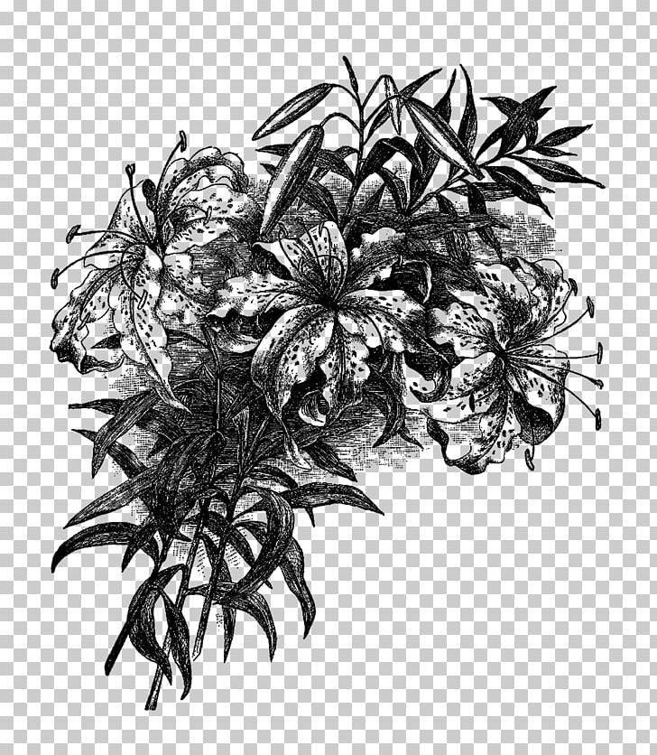 Easter lily spray black & white clipart png black and white library Easter Lily Flower Drawing PNG, Clipart, Black And White, Drawing ... png black and white library