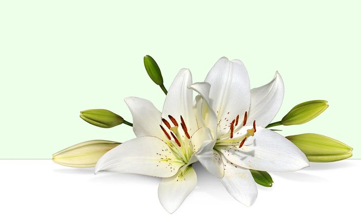 Easter row lilies clipart clipart library Easter row lilies clipart - ClipartFest clipart library