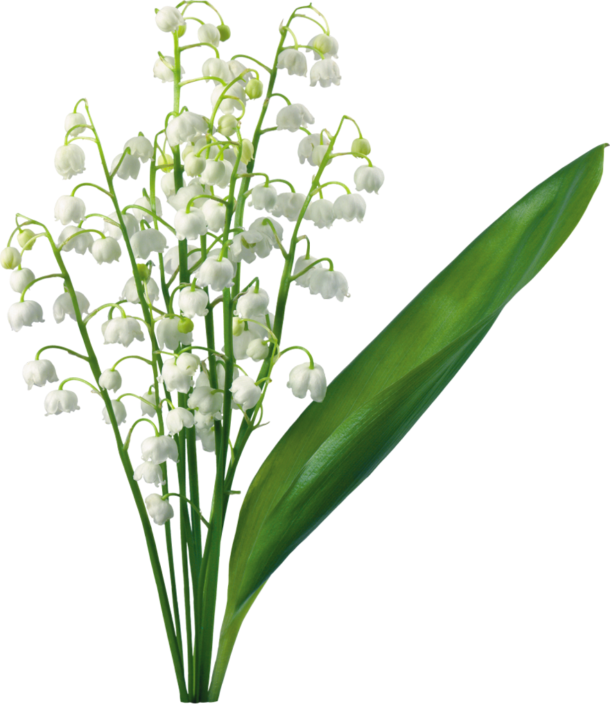 Easter row lilies clipart banner royalty free Easter lilies clipart transparent png - ClipartFox banner royalty free