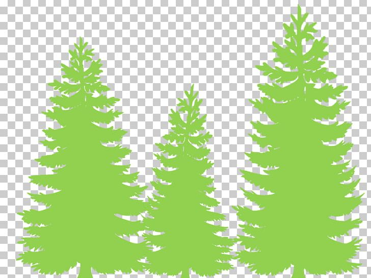 Eastern white pine clipart clip freeuse download Eastern White Pine Fir Tree Evergreen Conifers PNG, Clipart, Branch ... clip freeuse download