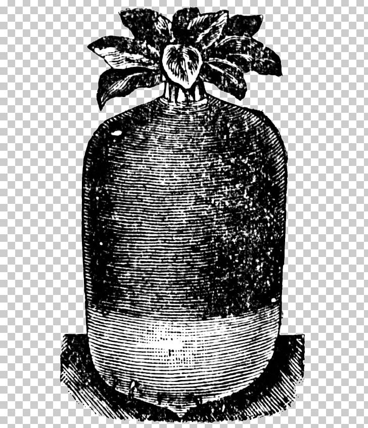 Eaten radish in ground clipart black and white svg transparent download Radish Root Vegetables Turnip PNG, Clipart, Black And White, Food ... svg transparent download
