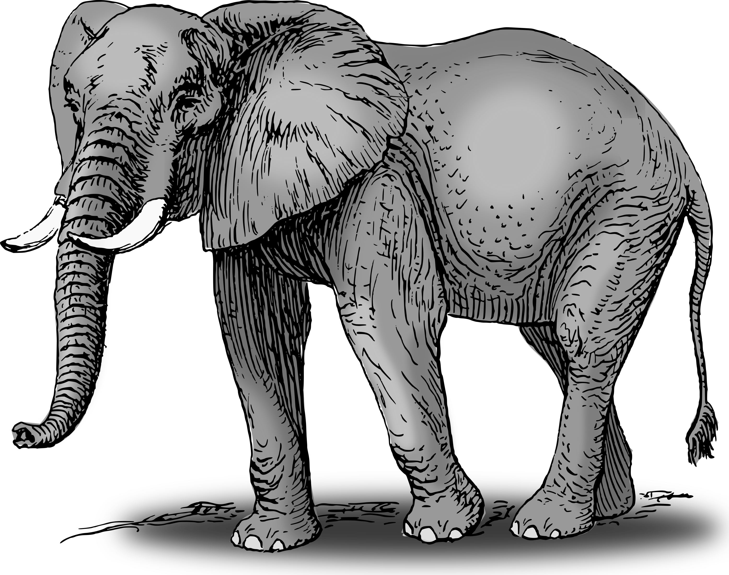 Elephant following elephant clipart picture free stock Clipart - Colored elephant picture free stock