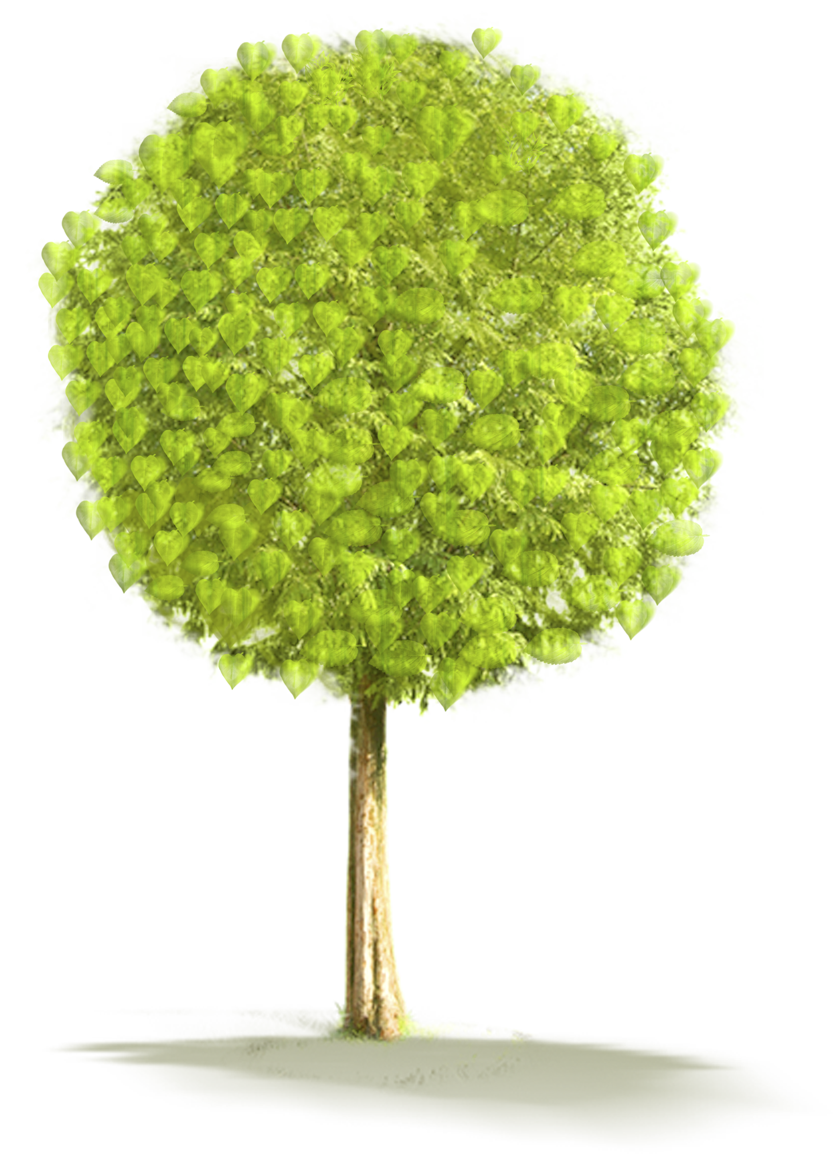 Large tree clipart picture free Large Tree PNG Clipart | Gallery Yopriceville - High-Quality Images ... picture free