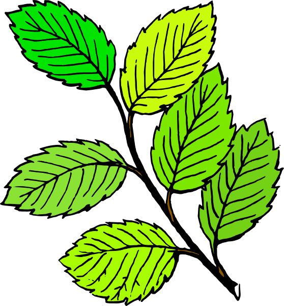 Elm tree clipart jpg library Summer Leaves Clip Art at Clker.com - vector clip art online ... jpg library