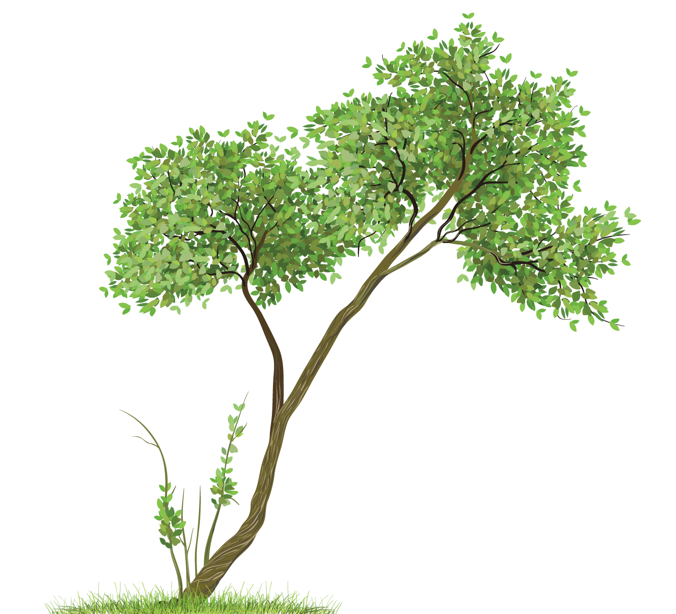 Transparent tree clipart freeuse stock Transparent Tree PNG Clipart | Gallery Yopriceville - High-Quality ... freeuse stock