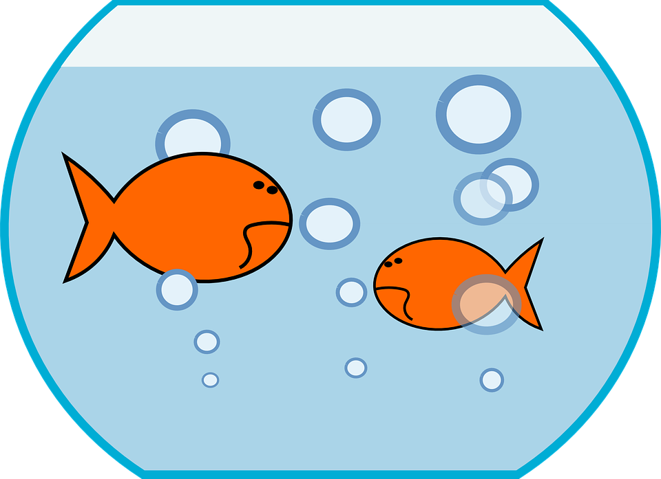 Fish in a tank clipart clipart free library Fish Tank Clipart Group (55+) clipart free library
