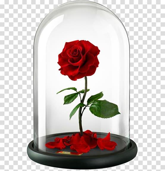 Enchanted rose pink beauty and the beast clipart svg free download Belle Beast Rose United Kingdom Flower, rose transparent background ... svg free download