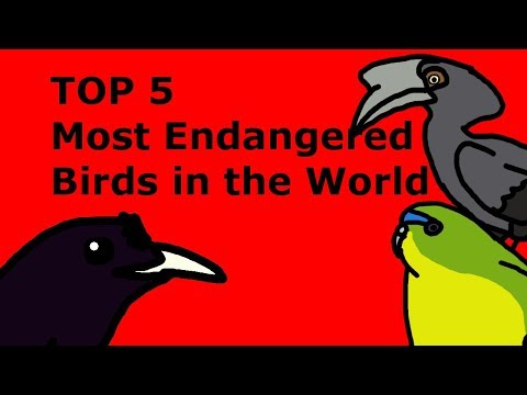 Endangered birds in clipart clip black and white The Top 5 Most Endangered Birds in the World clip black and white