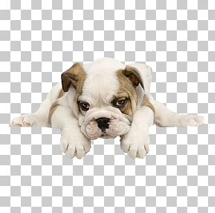 English bulldog cliparts free cricet picture royalty free Bulldog PNG Images, Bulldog Clipart Free Download picture royalty free