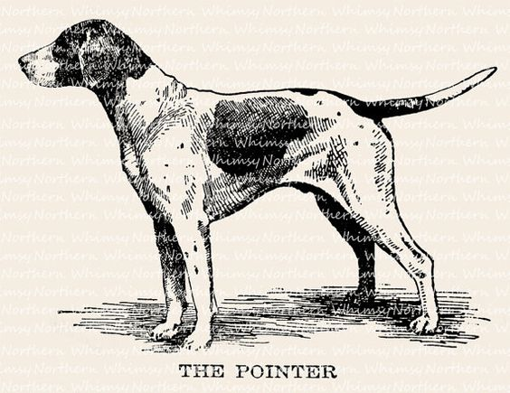 English pointer clipart picture black and white stock English Pointer Dog Illustration - Dog Clip Art – Dog Vintage ... picture black and white stock