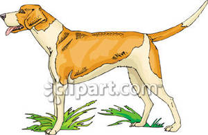 English pointer clipart banner freeuse download Breeds - English Pointer Royalty Free Clipart Picture banner freeuse download
