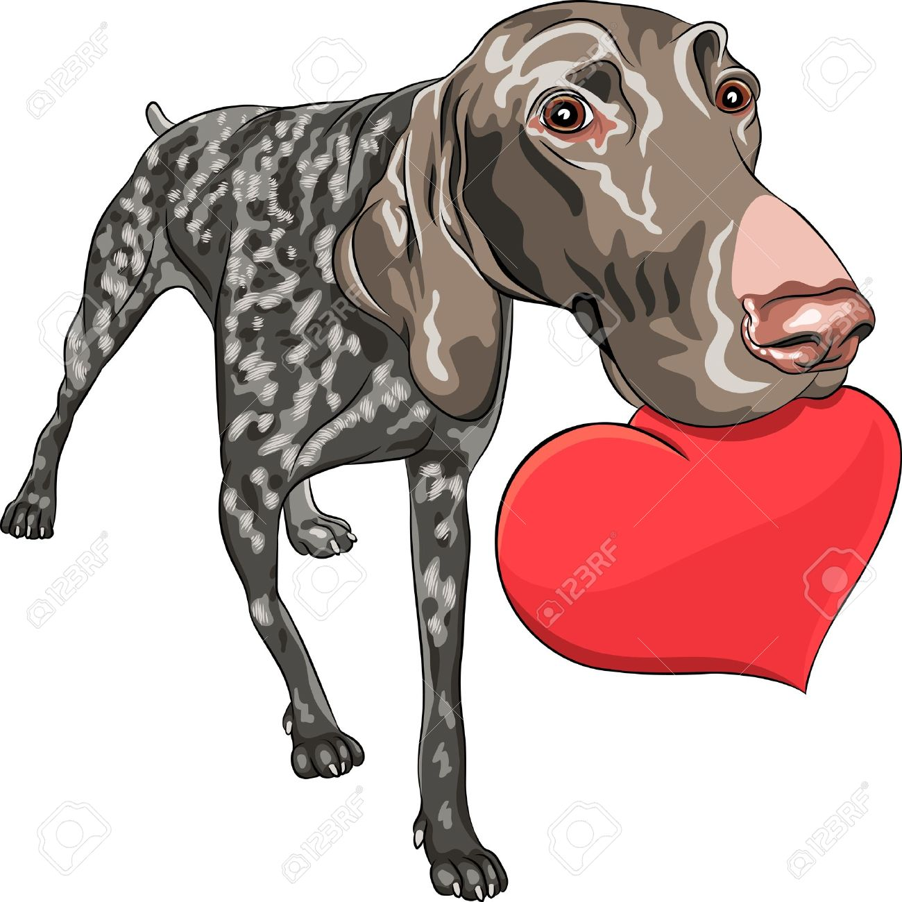 English pointer clipart picture German shorthaired pointer clipart - ClipartFest picture