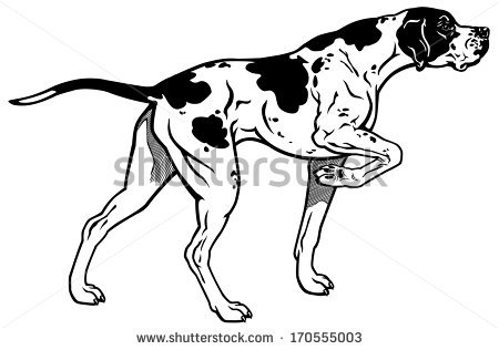English pointer clipart image library library English Pointer Stock Vectors, Images & Vector Art | Shutterstock image library library