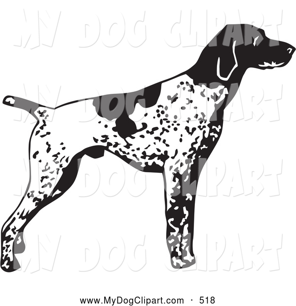 English pointer clipart graphic library library Clip Art of a Alert English Pointer Dog Canine, Standing and ... graphic library library