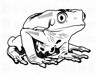 Etsy happy frog cliparts vector royalty free stock Horned Frog Drawing | Free download best Horned Frog Drawing on ... vector royalty free stock