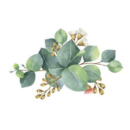 Eucalyptus leaves clipart svg freeuse Eucalyptus leaves clipart 7 » Clipart Portal svg freeuse