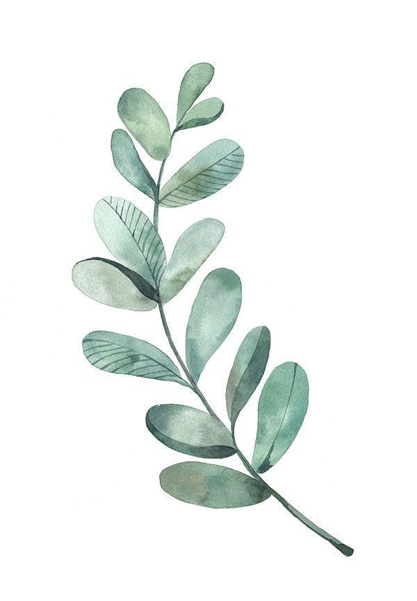 Eucalyptus leaves clipart clip transparent library Bilderesultat for eucalyptus leaves | Watercolour inspiration ... clip transparent library