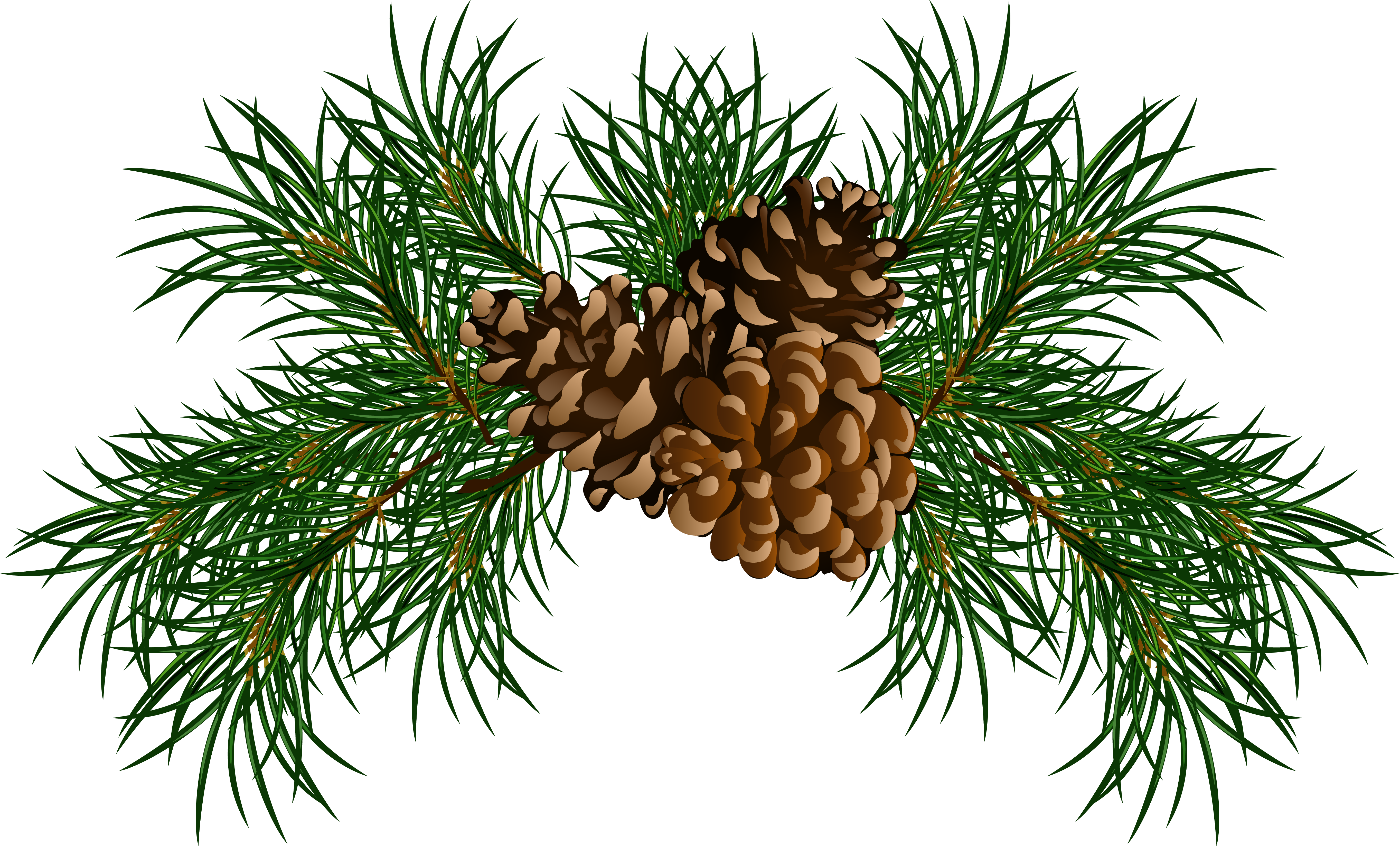 Loblolly pine tree branch clipart banner download Evergeen branches clipart png transparent background - ClipartFest banner download