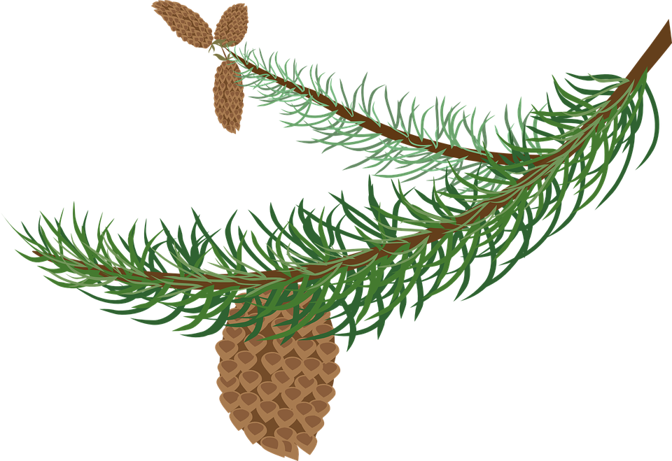 Evergeen branches clipart png transparent background picture transparent stock Free vector graphic: Branch, Cones, Fir, Green, Spruce - Free ... picture transparent stock