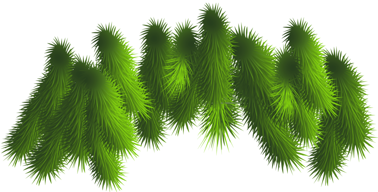 Evergeen branches clipart png transparent background picture freeuse download Fir Tree Branches Clip Art – Clipart Free Download picture freeuse download