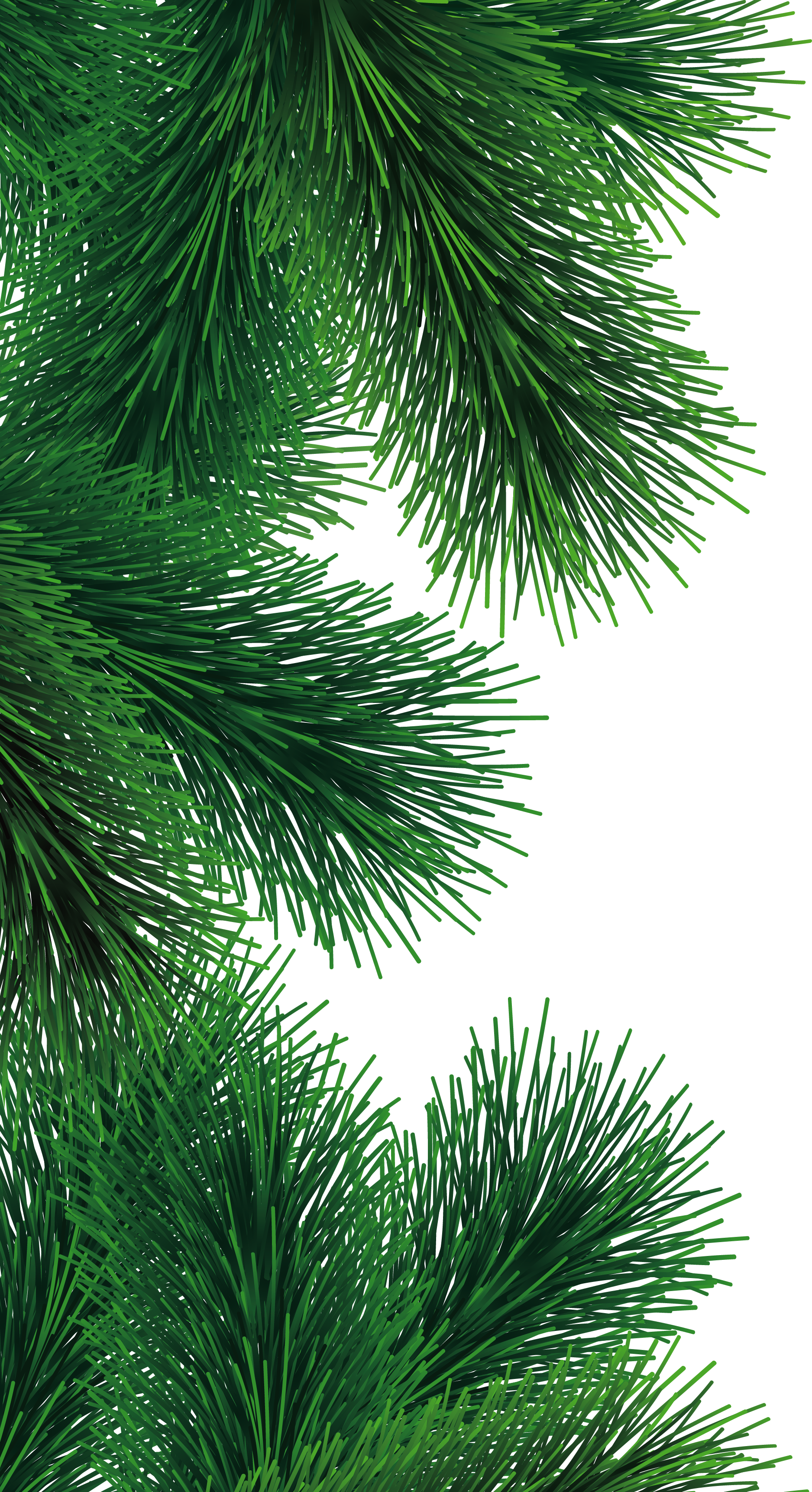 Pine tree branch clipart image freeuse Fir-tree PNG images, free download picture image freeuse