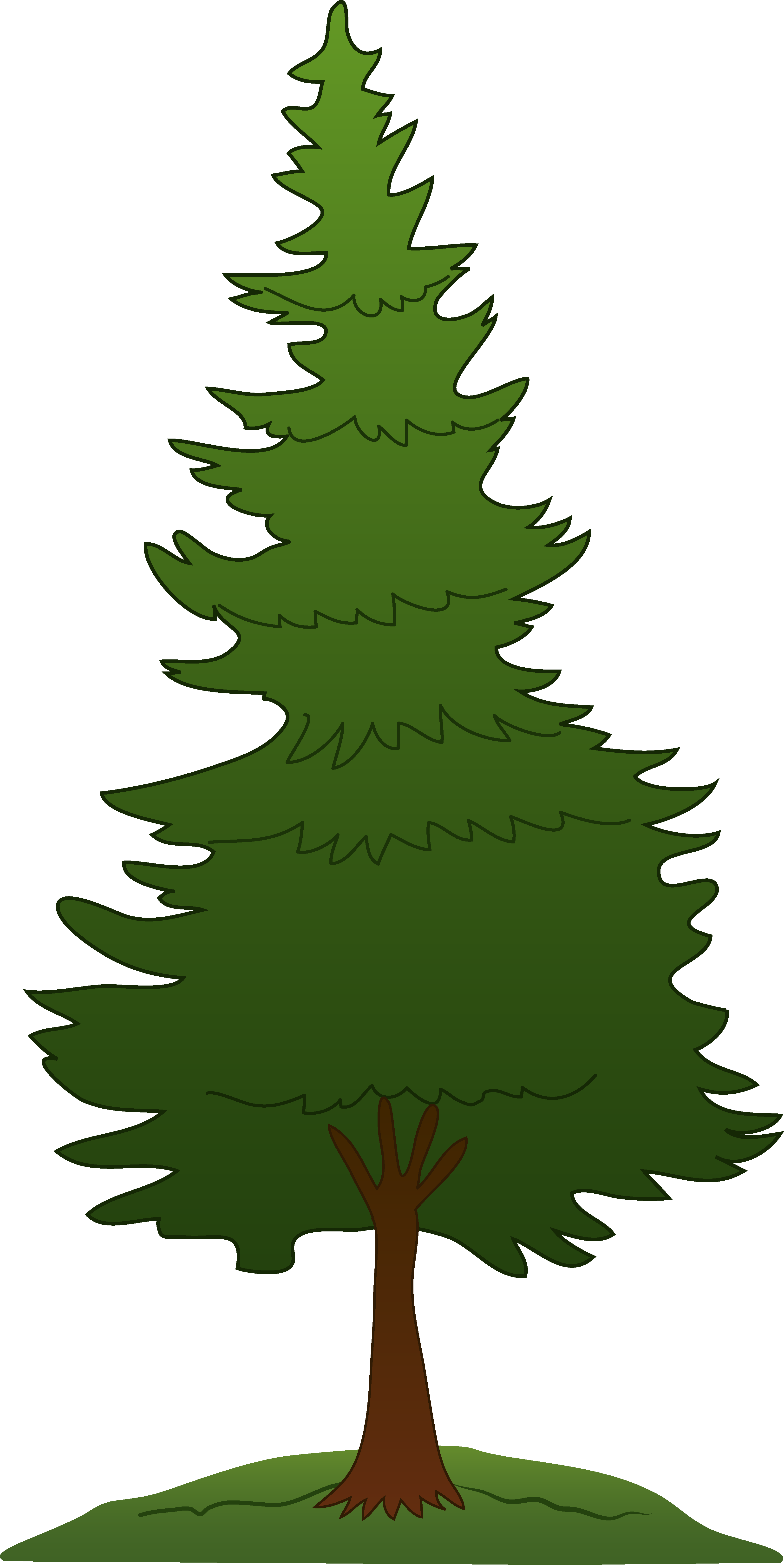 Evergeen branches clipart png transparent background clipart library library Evergreen tree clipart - ClipartFest clipart library library