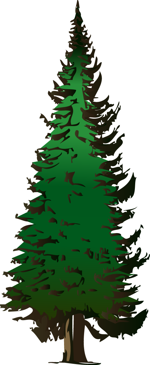 Pine tree clipart transparent background svg royalty free Evergeen branches clipart png transparent background - ClipartFest svg royalty free