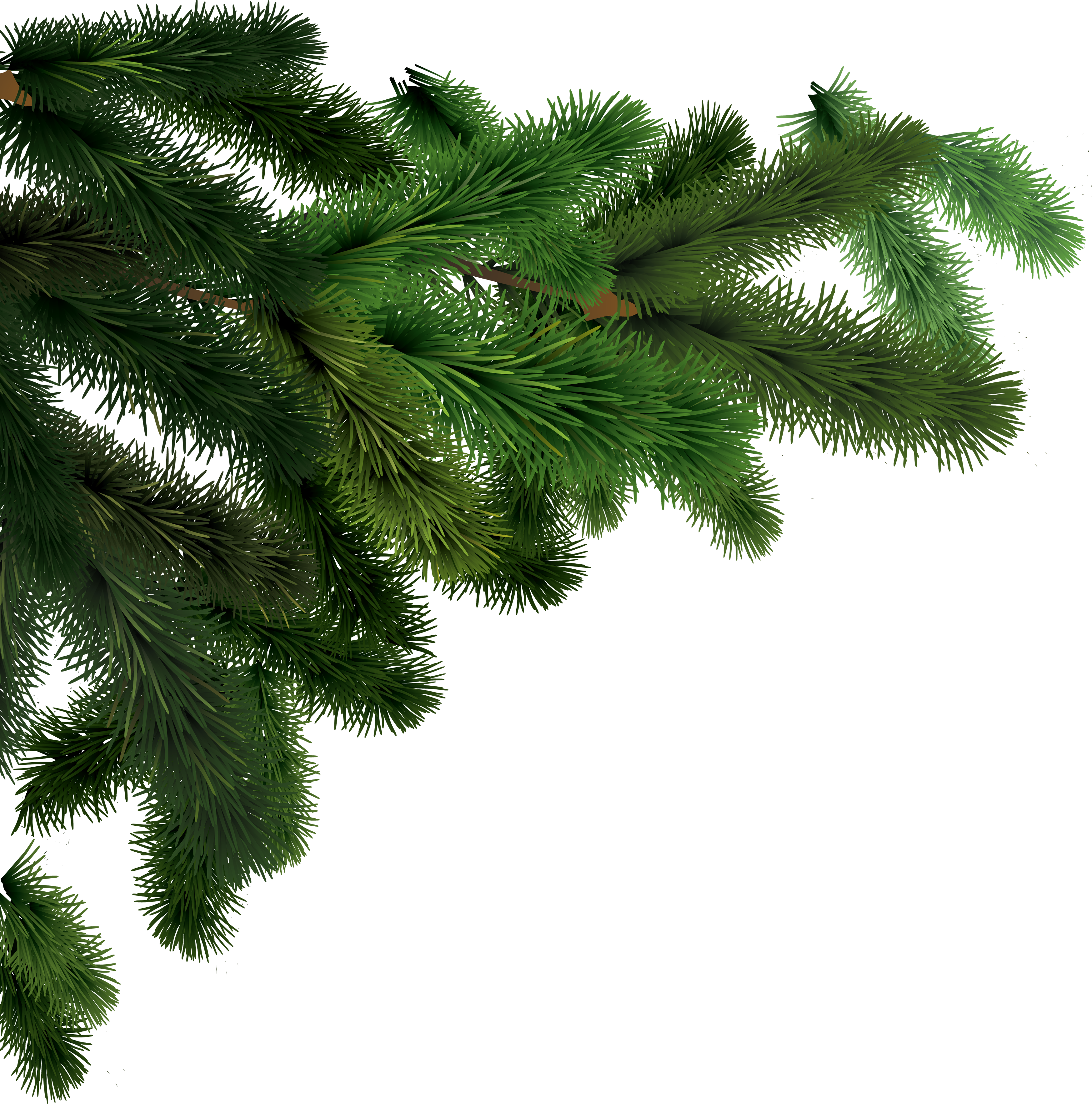 Evergeen branches clipart png transparent background picture stock Fir-tree PNG images, free download picture picture stock
