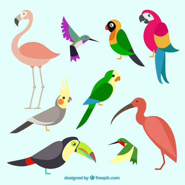 Exotic bird clipart clipart library download Tropical Bird Clipart | Free download best Tropical Bird Clipart on ... clipart library download
