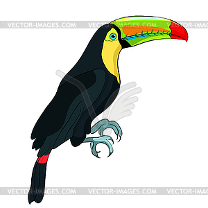 Exotic bird clipart picture free stock Toucan rainbow exotic bird - color vector clipart picture free stock